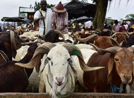 In pictures: Muslims preparing to celebrate the annual festival of Eid al-Adha
