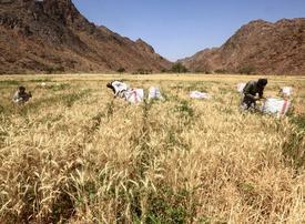 Saudi Arabia to establish national development fund