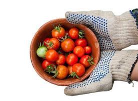 Abu Dhabi agribusiness eyes $10m for UAE, Saudi expansion