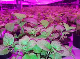 GCC's first commercial vertical farm inks distribution deal