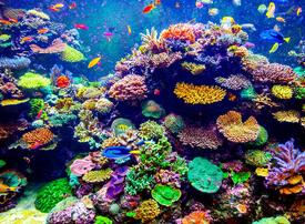 Revealed: world's largest coral reef park to be created off UAE coast