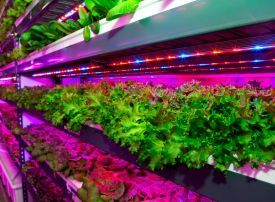 Video: Crop One and Emirates plans to build world largest vertical farm in Dubai