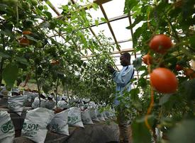 UAE signs deal to build 12 vertical farms in Dubai