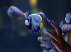 In pictures: Newly-opened 'Palestine Aquarium' turned into a tourist attraction in Ramallah