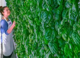SoftBank-backed vertical farm set to open Abu Dhabi