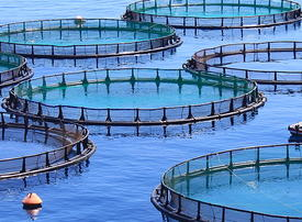 Dubai South to host fish farm as UAE scales up on aquaculture