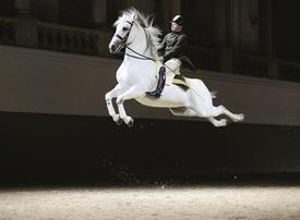 Vienna riding school set to make MidEast debut in Abu Dhabi