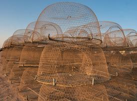 UAE to ban gargoor nets to protect Abu Dhabi fisheries