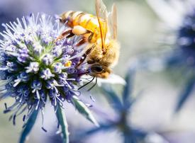 Quite a buzz: connecting intelligent beehives for long-term data analysis