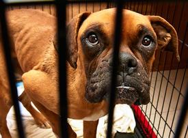UAE launches new website to report animal cruelty