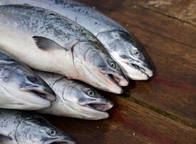Norwegian firm plans to create first salmon farm in Saudi Arabia
