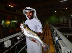Salmon farming thriving in Dubai's desert