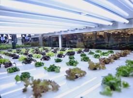 Carrefour launches first UAE in-store farms to reduce carbon footprint