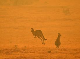 Troops deployed across fire-hit Australia after horror weekend