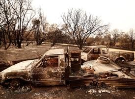 Australian bushfires 'devastating' for country's meat and livestock producers