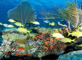 UAE donates $3.5m to restore Florida Keys coral reefs