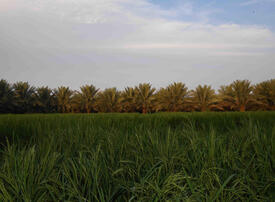 Saudi Arabia allocates $533m to fund agricultural projects