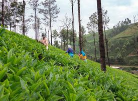 Video: The fears of India's tea workers in coronavirus lockdown