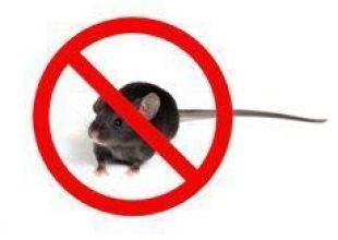 Just say 'no' to MICE
