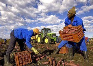 Saudi Arabian firm to invest $125m in Zambia farmland