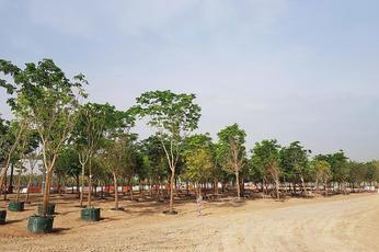 Colour Me Green: The Expo 2020 Dubai nursery