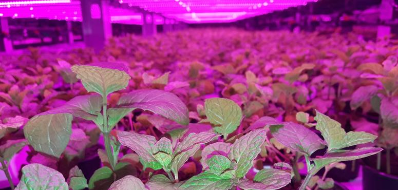 New Dubai vertical farm set to start operations in Q2 2020