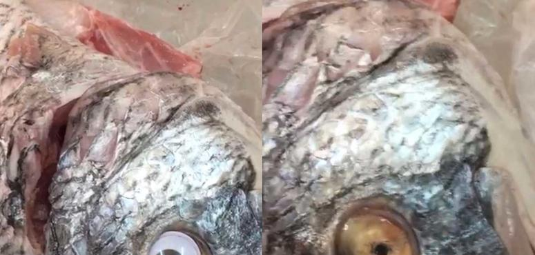 Kuwait shuts down store for sticking plastic eyes on fish
