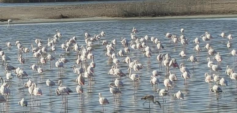 Abu Dhabi nature reserve is first to win international IUCN status