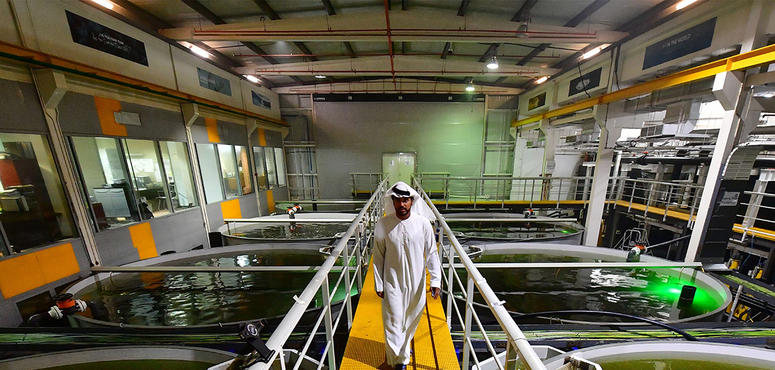 Video: Could inland fish farms ease the UAE's depleted fish stocks?