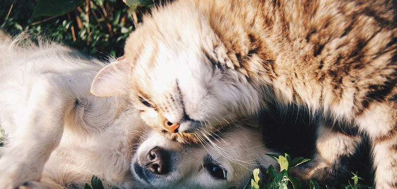Covid-19: Looking after pets during times of coronavirus