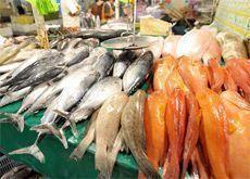 Low fish stocks threaten Bahrain's fishing industry