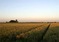 Saudi to phase out water intensive crops - minister