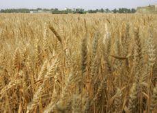 Qatar eyes solar power to boost arable farming