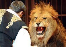 Airline refusal blamed for abandoned lions