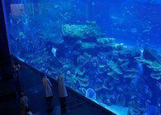 Dubai Aquarium sees 1.5m-plus paid visitors in first year