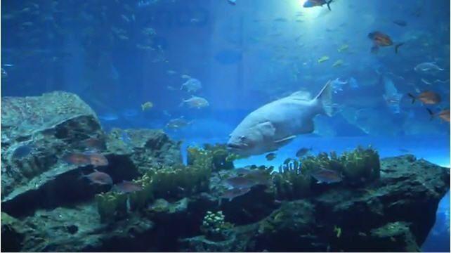 The wonders at the Dubai Mall aquarium
