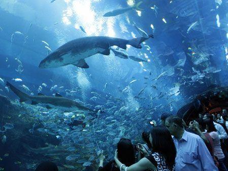 Dubai Mall's water kingdom