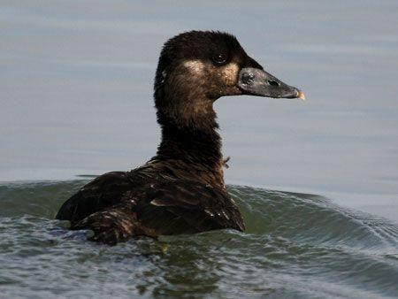 Dubai Star oil-spill victims freed