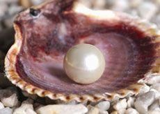 Dubai records $27.12m worth of pearl trade in 2009