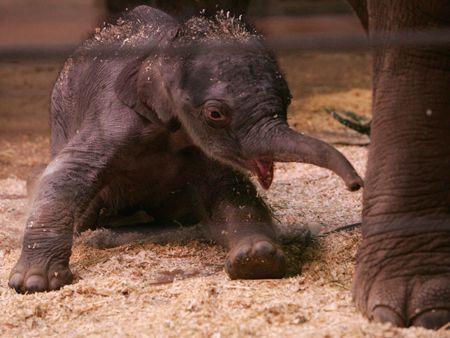 Baby elephant makes zoo debut