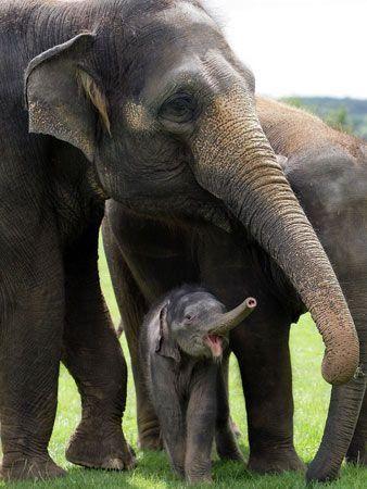 Baby elephant makes UK debut