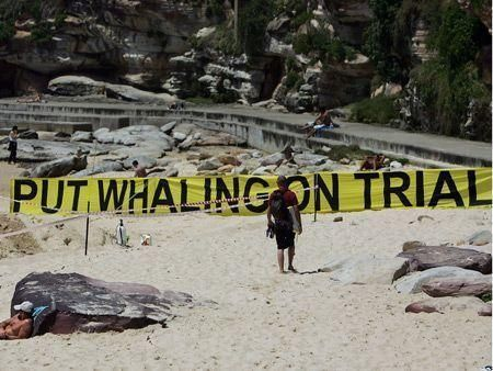 Greenpeace's anti-whaling protest