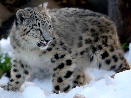 Australian Zoo's animals enjoy the snow