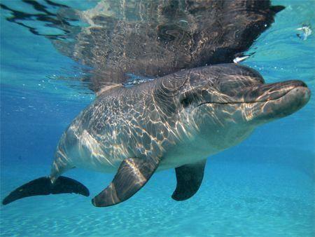 Actress Mischa Barton swims with Dubai dolphin