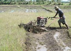 Indonesia sees rice crop up, seeks Gulf farm inv't