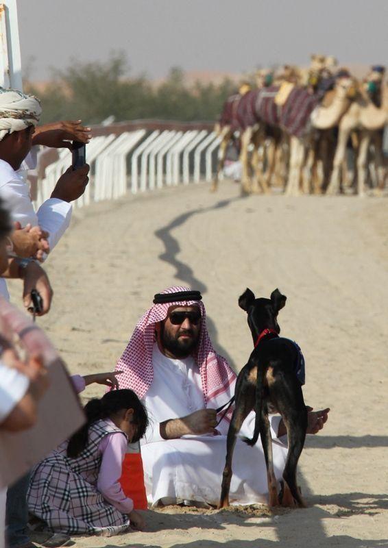 First Arab heritage Saluki race festival