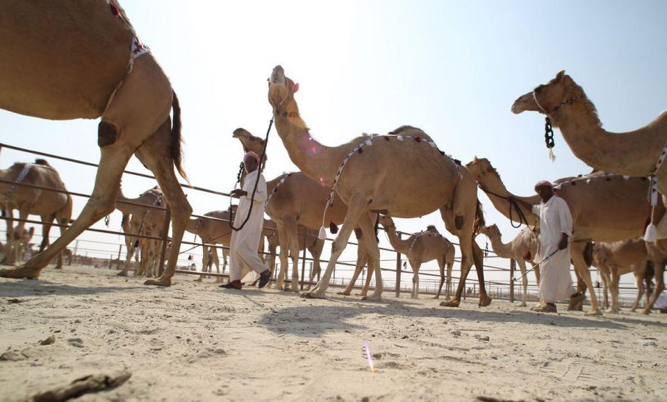 Aussie entrepreneur aims to scrap camel cull with Gulf help