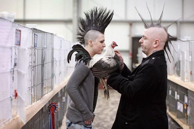 Scottish National Poultry Show attracts more than 3,500 exhibits