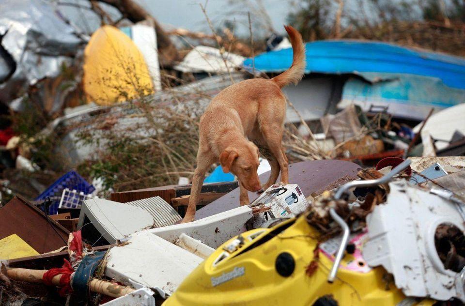 Alabama still reeling from disastrous tornado outbreak