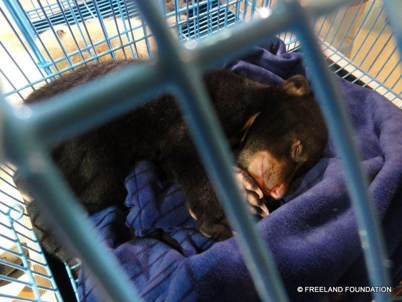 UAE man held over Bangkok Airport animal smuggling bid
